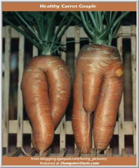 carrotcouple460dd